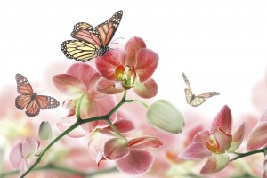 Fototapeta na flizelinie MS-5-0146 ORCHIDS AND BUTTERFLY